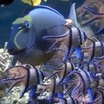 Animal Planet Live: красный риф