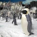 Пингвины на зоопарке SeaWorld