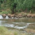 Дикая натура Южной Африки